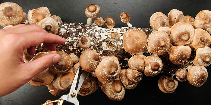 Fresh Mushrooms from Qimin Organic Hotpot Marketplace (Hengshan Lu) located in Xuhui, Shanghai