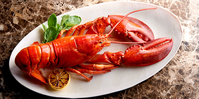Lobster from Morton