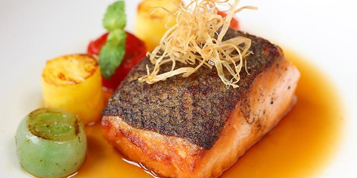 Salmon of Light & Salt Daily in Jing