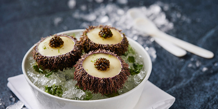 Sea Urchin Lower from Phenix Eatery and Bar located in Jing