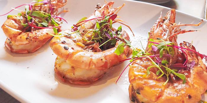 Shrimp of Kathleen