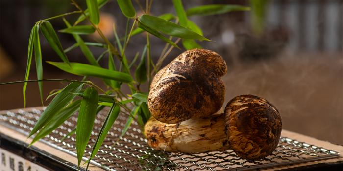 Mushroom of Utsuseni located in Huangpu, Shanghai